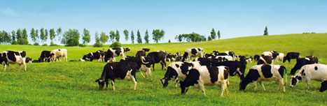 Silicone for dairy farming