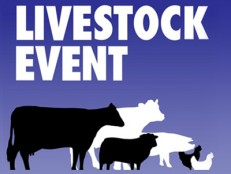Silclear at Livestock 2014